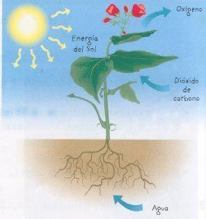 Las plantas y el aire davysanchez1996 Plantas limpiadoras de aire