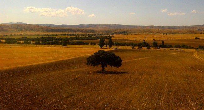 El clima mediterr neo continental for Clima mediterraneo de interior